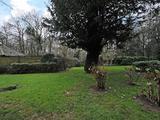 Thumbnail image 7 of Selhurst Close