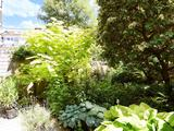 Thumbnail image 10 of Garden Row